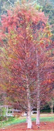 KMHuberimage; larch in autumn