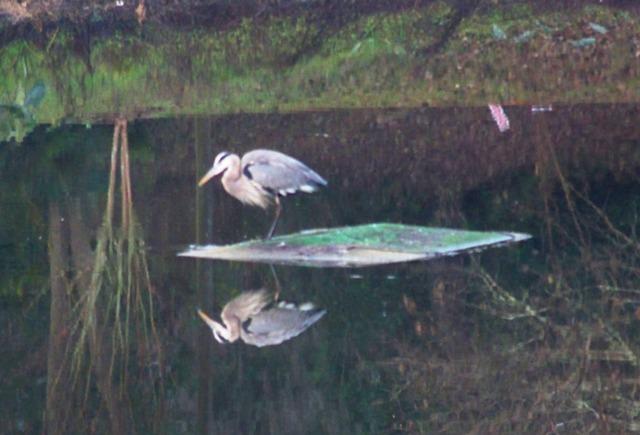 KMHuber; Dark Moments; Waverly Pond; Tallahassee