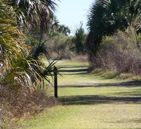 KMHuberImage; Gulf of Mexico, FL; St. Mark's Wildlife Refuge