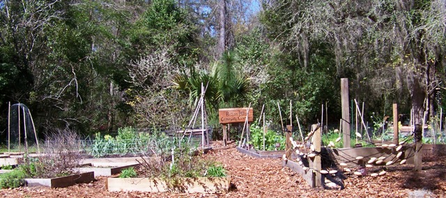 Community Garden 0213