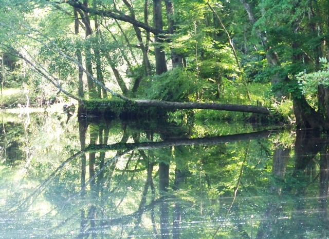 Morning at Natural Bridge Battle 0613