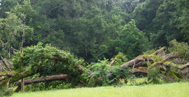 Tree sprawl 0713