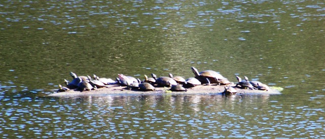 Turtle Row in fall 1013