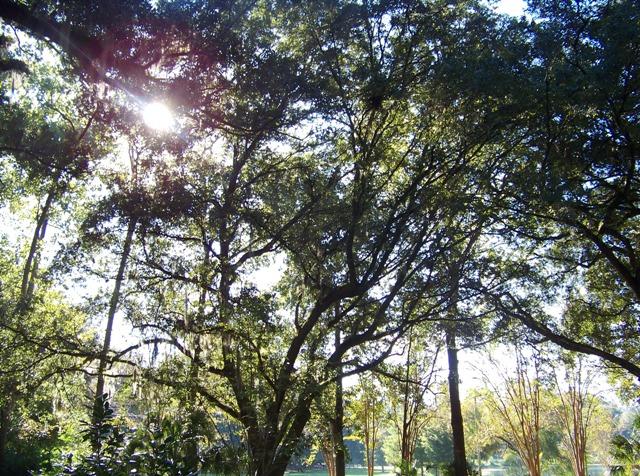 Waverly shade 1013