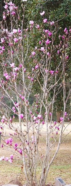 Not Yet Spring 0214