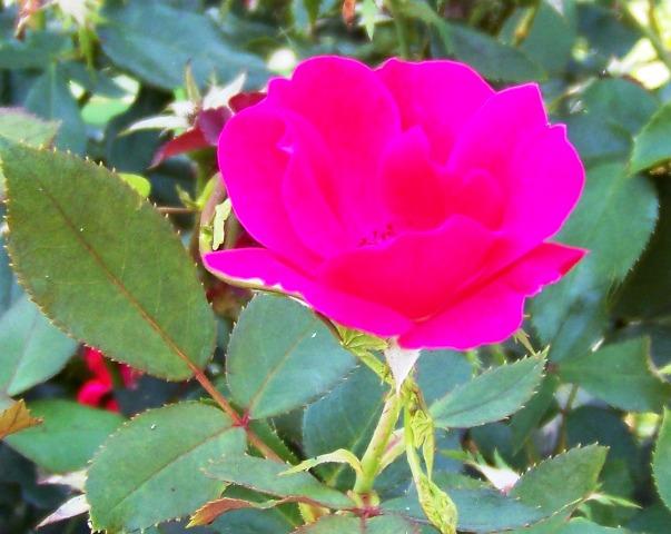 The Blossom 0814