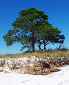 Lone tree 1014